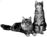 Intamplari de iarna cu caini si pisici