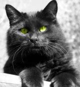 "O pisicuta ""doctor"": Koly"