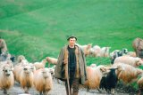 Ciobanii din Vatava si branza de la Bruxelles