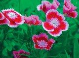 Sanatate din gradina cu flori