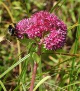 5 Plante Anticancerigene Si Retetele Lor