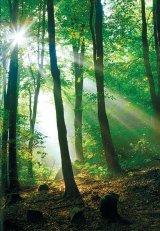Energizati-va cu ajutorul copacilor!