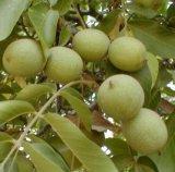 Remedii naturale contra reumatismului