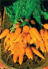 Vitamina A - miracolul sistemului imunitar