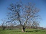 Despre ingrijirea pomilor...