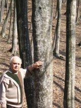 Scoarta De Arbusti Si Copaci
