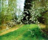 Florile de porumbar