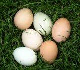 Feluri cu oua
