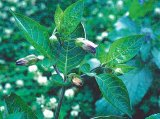 Medicina Mileniului Trei: Homeopatia