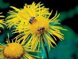 Medicamentul vietii - Mierea De Albine (I)