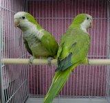 Poveste cu papagali