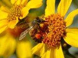 Leacuri de vara cu miere si flori