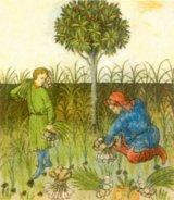 Farmacie medievala