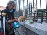 Pisicile fericite din Roma