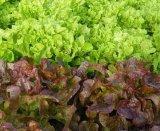 Farfuria cu salata