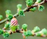Sanatate din petale de flori: terapia BACH