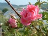 Calatorie intr-o gradina cu flori