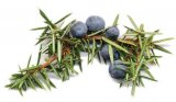 Fructele de ienupar