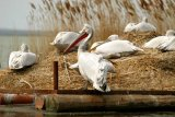 O crima in Delta Dunarii