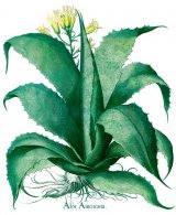Remedii cu plante pentru bolile femeiesti