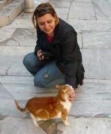 Istanbul - raiul pisicilor hoinare