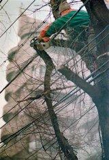 """Nicolae Radulescu Dobrogea - """"Taierea fara noima a copacilor e o crima"""""""