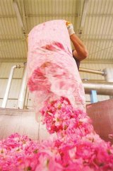 Retete de sanatate cu trandafiri