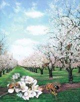 Miracolul din borcanul cu miere