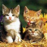 Cainii si pisicile Romei