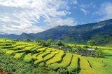 O alifie-minune: BALSAMUL VIETNAMEZ
