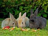 O poveste cu iepuri