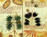 Manuscrisul lui Voynich