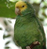 Caraici-Papy