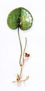 Plante rele, cu efect bun