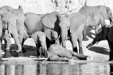 Povesti triste cu elefanti