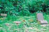 Printre gorilele din Ruanda