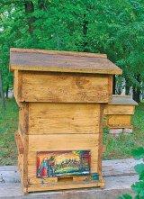 Albinele, la un congres mondial