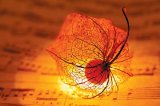 Serenade de noiembrie