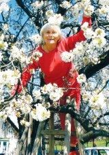 Elena si florile de cires