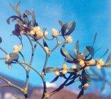 Un extraterestru in lumea plantelor: VASCUL
