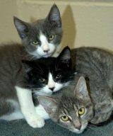 Trei pisici