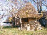 Comorile din pesterile Bihorului
