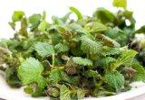 O arma secreta in lumea plantelor: URZICA VIE