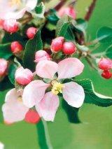 Leacuri din flori