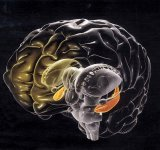 Tumori cerebrale