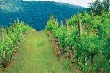 Drumului Vinului