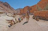 Manastirea Sfanta Ecaterina * Muntenii valahi ai Sinaiului: Beduinii Gebalieh