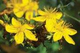 Planta sufletului: SUNATOAREA